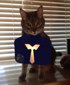 Cat Tie reflector