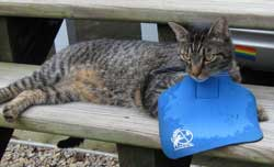 CatBib saves birds
