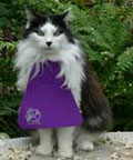 Pearl the cat with catbib on