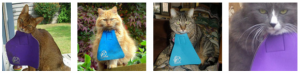 cats with bibs on