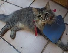 Mushki wearing a bird saving CatBib